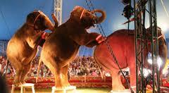 Dumbo is in town
