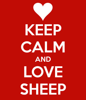 love my sheep in love with a sheep it was hilarious to see that