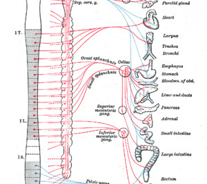 Search Results for: Human Nervous System Diagram Labeled