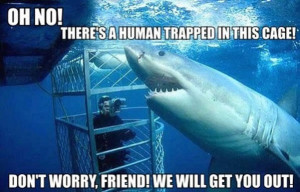 Helpful_Shark_funny_picture