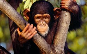 Interesting facts about monkeys, cute monkey