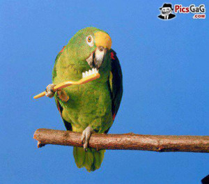 Funny Parrots Cleaning Teeth