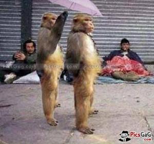 Funny Monkey Pic Like...