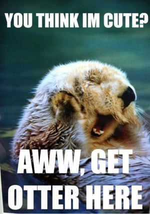 super funny animal puns!you think i m cute get otter here...