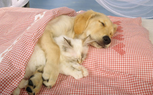 dog-and-cat-sleeping-together-145.jpg