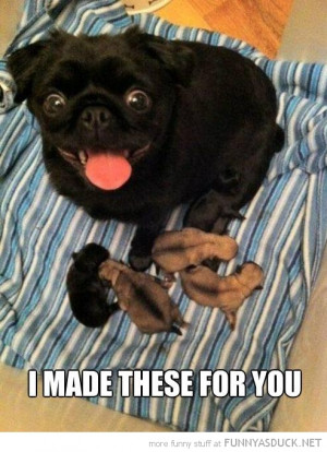happy pug dog animal puppys made for you funny pics pictures pic ...