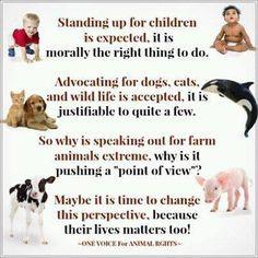 Pro vegan: ♥ More