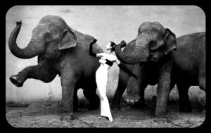Elephants Emotional Intelligence