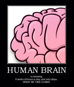 funny-picture-human-brain-exams
