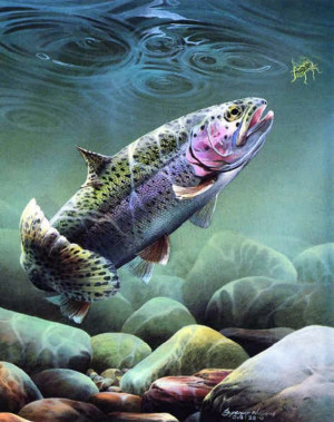 fly fishing trout Image