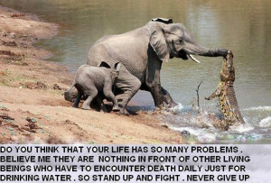 ... elephant fighting crocodile motivational quote on life mean struggle