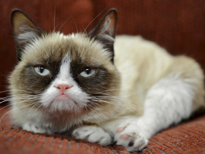 Grumpy Cat Comes to Downtown Santa Monica