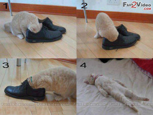 ... Stinky Feet Funny Shoes Which Make Cat Senseless. These Funny Stinky