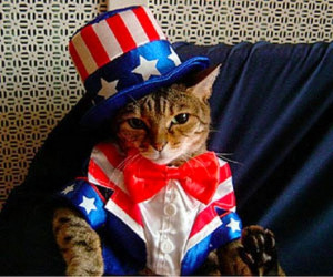 do you like july 4th images fourth of july photos funny 4th of july