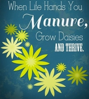 When life hands you manure, grow daisies and thrive