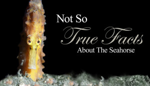 Not So True Facts About The Seahorse