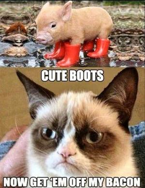 Enjoy. Here are my 35 Favorite Grumpy Cat Memes, so far.