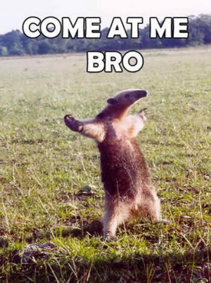 The Best Of: Come at Me Bro meme