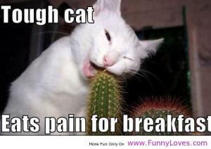 Tough Cat Eats Pain For Breakfast, Funny Animal Quote