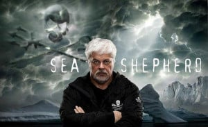 Paul Watson: For 35 years, Captain Paul Watson was at the helm of the ...