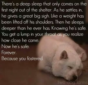 Please foster it does save lives