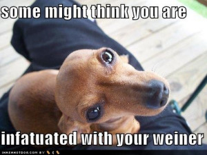 funny weiner dog quotes