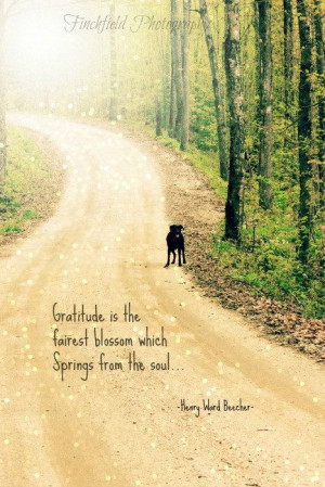 Gratitude nature photography famous quote summer by finchfieldart, $30 ...