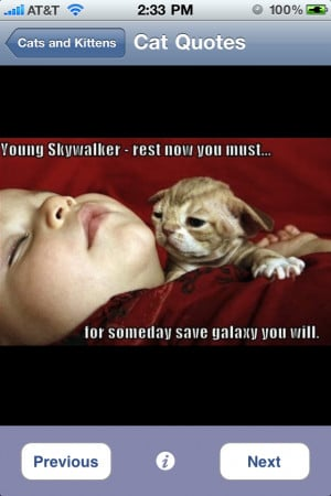 related cutest cats kittens cat pics friends kitten photos free cat ...