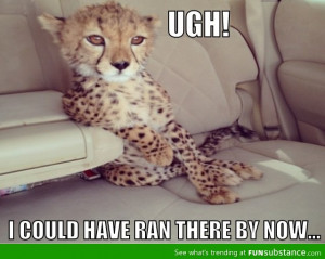 awesome, cheetah, funny, humor, impatient, lol, photo, quotes, text