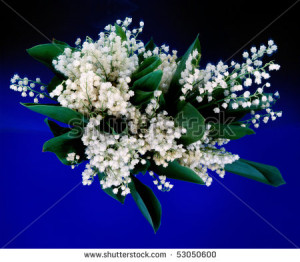 lily of the valley.flowers. bouquet. - stock photo