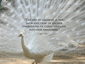 The key to growth is the introduction of higher dimensions of ...
