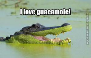 funny pics crocodile love guacamole