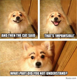 Funny dog jokes - Funny Pictures, Funny Quotes, Funny Videos - 9LoLs ...