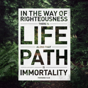 In the way of righteousness there is life along that path is ...