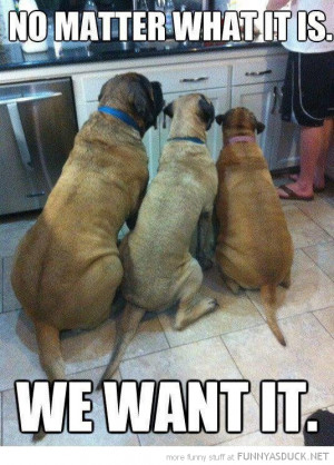 dogs animals waiting food kitchen no matter what we want funny pics ...