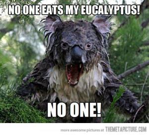 funny koala drinking water cute