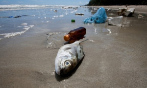 Microscopic Plastic Consumed by Fish Ultimately Hurt Humans Natural