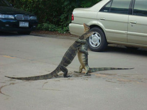 Funny photos funny lizards hugging fighting