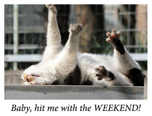 Yes baby! It's the weekend!!! Have a great one!