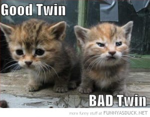 cute cats lolcats animals angry grumpy kitten good bad twin funny pics ...