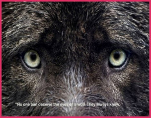 No one can deceive the eyes of a wolf. They always know.