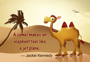 Funny Sayings About Camels