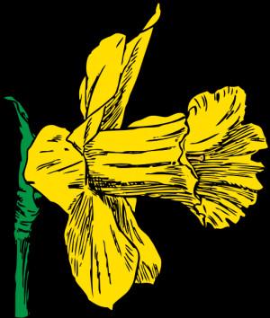 Yellow Daffodils Drawing Infinity symbol clip art