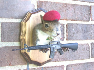 Image: funny_squirrel_picture_13.jpg]