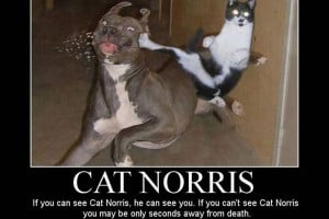 funny cat ninja 25 Funny Pictures With Quotes You Should Check Today