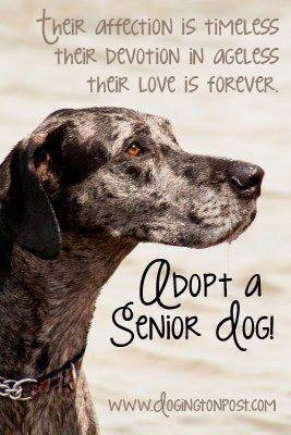 senior dogs make great pets..this looks exactly like my cubby boy. i ...