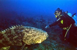So, my tactic with conservation of apex predators is to get people ...