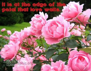 Pink Roses Quotes