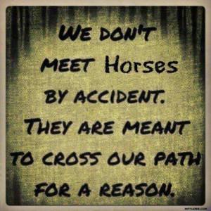 Horses - NO ACCIDENTS!!!!!