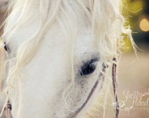 Horse Quotes About Trust White percheron mare horse